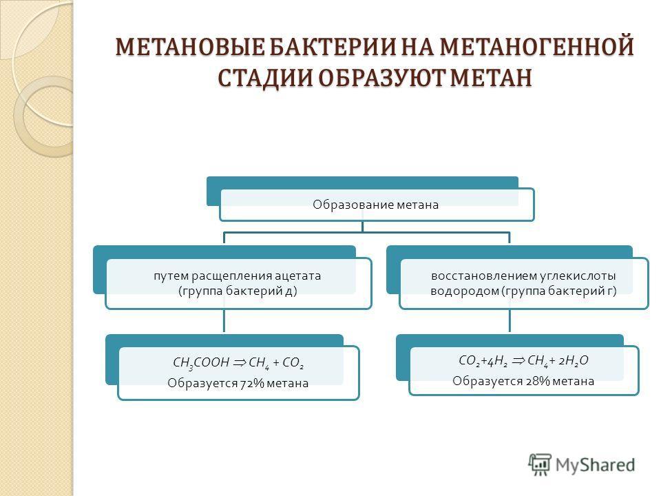 МЕТАНОВЫЕ БАКТЕРИИ НА МЕТАНОГЕННОЙ СТАДИИ ОБРАЗУЮТ МЕТАН Образование метана путем расщепления ацетата ( группа бактерий д ) CH3COOH СН 4 + СО 2 Образуется 72% метана восстановлением углекислоты водородом ( группа бактерий г ) СО 2+4 Н 2 CH 4 + 2 Н 2O