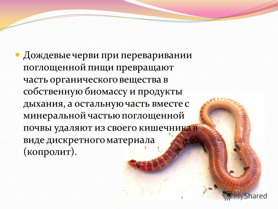 Дождевые черви при переваривании поглощенной пищи превращают часть органического вещества в собственную биомассу и продукты дыхания, а остальную часть вместе с минеральной частью поглощенной почвы удаляют из своего кишечника в виде дискретного матери