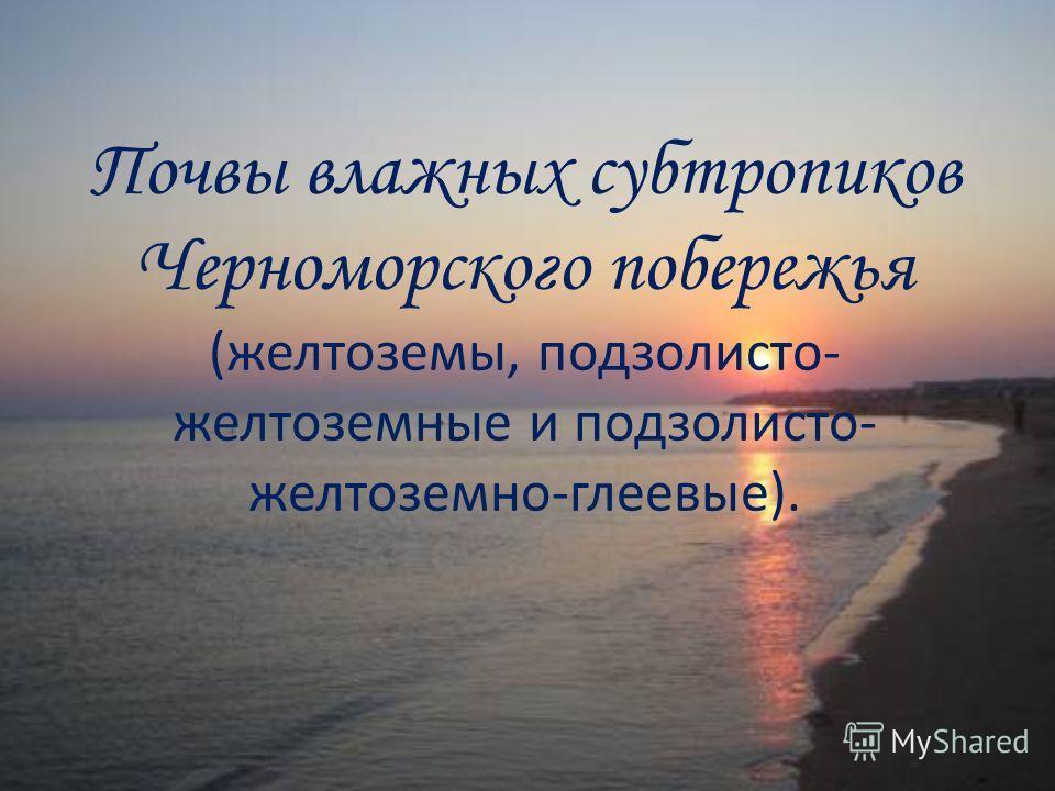 Почвы влажных субтропиков Черноморского побережья (желтоземы, подзолисто- желтоземные и подзолисто- желтоземно-глеевые).
