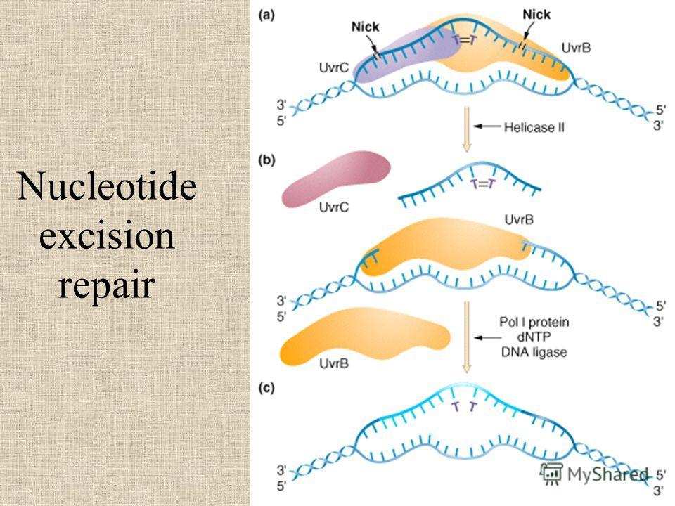 Nucleotide excision repair