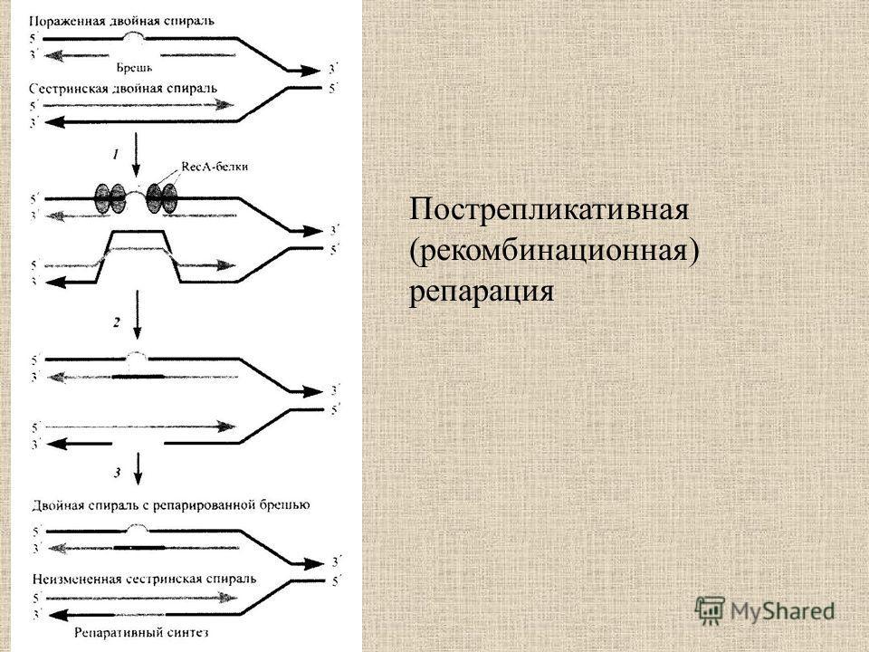 Пострепликативная (рекомбинационная) репарация