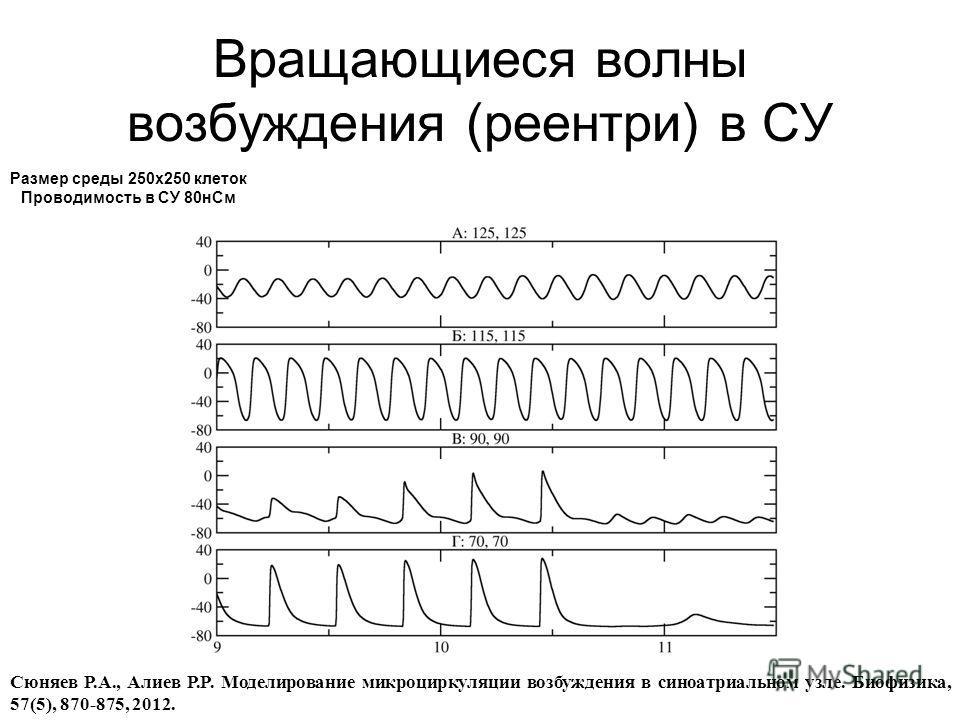 Вращающиеся волны возбуждения (реентри) в СУ Cюняев Р.А., Алиев Р.Р. Моделирование микроциркуляции возбуждения в синоатриальном узле. Биофизика, 57(5), 870-875, 2012. Размер среды 250x250 клеток Проводимость в СУ 80нСм