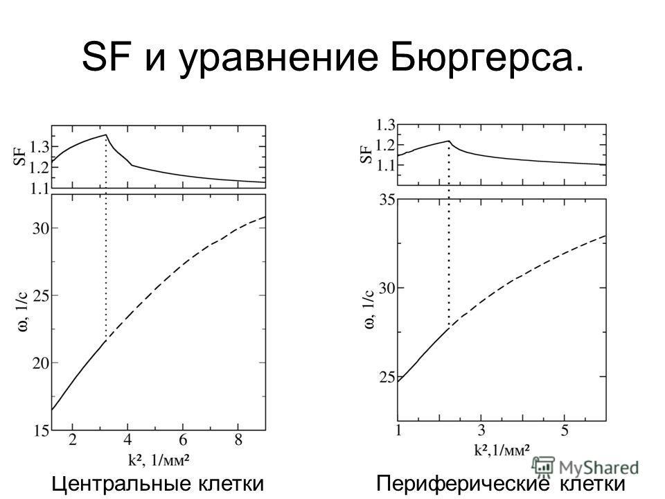 SF и уравнение Бюргерса. Центральные клеткиПериферические клетки