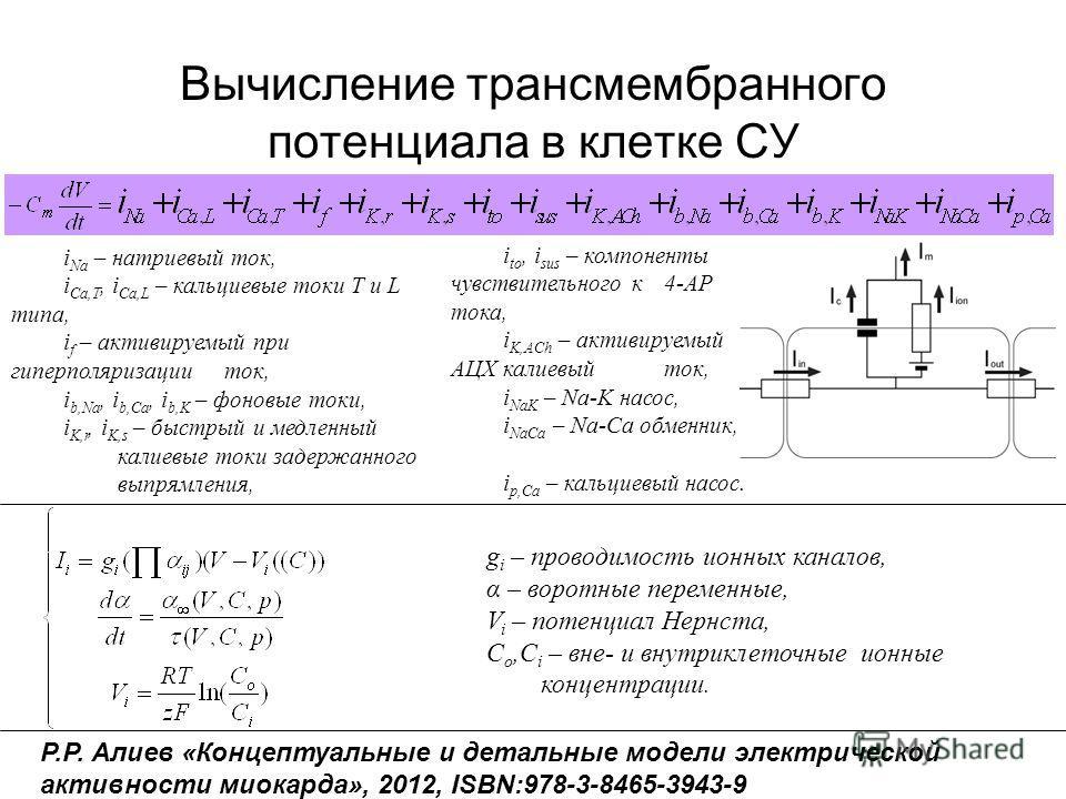 Вычисление трансмембранного потенциала в клетке СУ i Na – натриевый ток, i Ca,T, i Ca,L – кальциевые токи Т и L типа, i f – активируемый при гиперполяризации ток, i b,Na, i b,Ca, i b,K – фоновые токи, i K,r, i K,s – быстрый и медленный калиевые токи