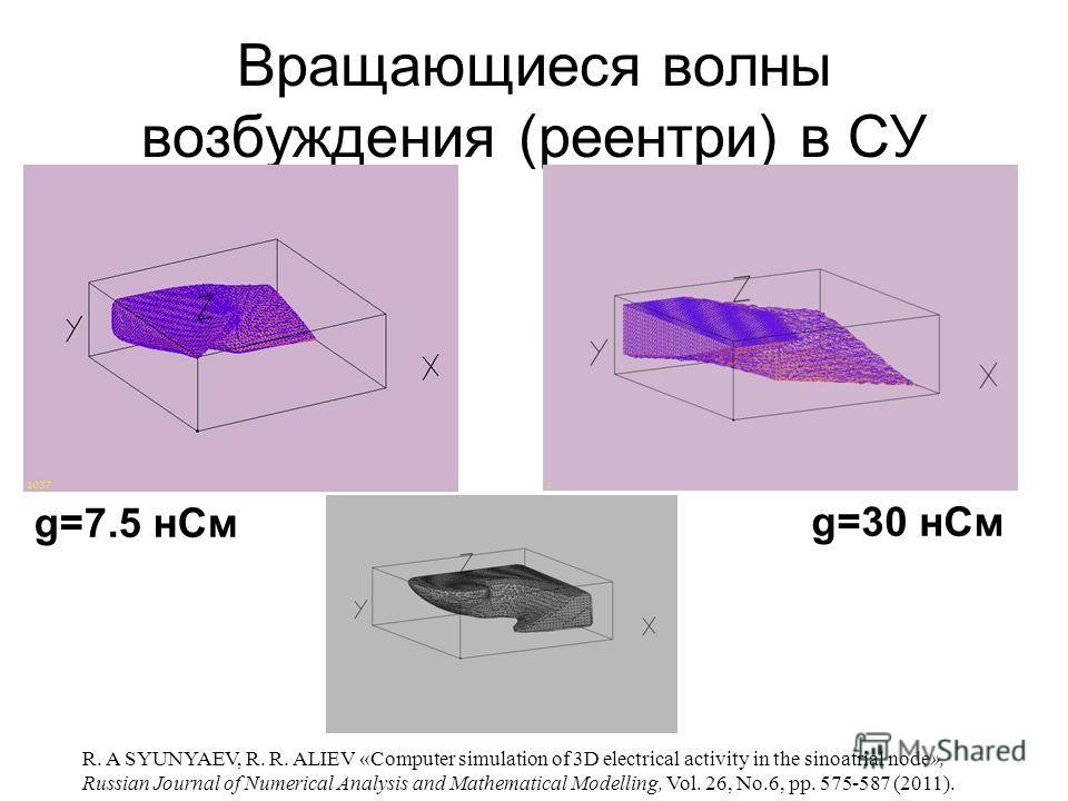 Вращающиеся волны возбуждения (реентри) в СУ g=7.5 нСм g=30 нСм R. A SYUNYAEV, R. R. ALIEV «Computer simulation of 3D electrical activity in the sinoatrial node», Russian Journal of Numerical Analysis and Mathematical Modelling, Vol. 26, No.6, pp. 57