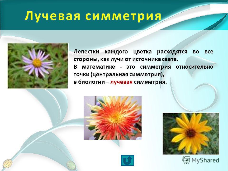 Лепестки каждого цветка расходятся во все стороны, как лучи от источника света. В математике - это симметрия относительно точки (центральная симметрия), в биологии – лучевая симметрия.