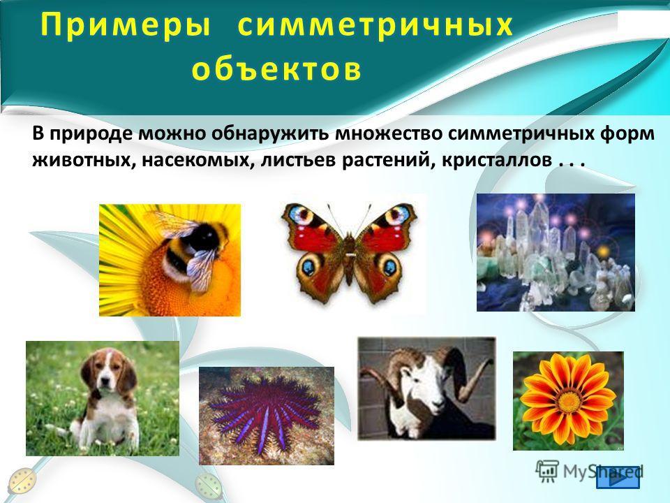 В природе можно обнаружить множество симметричных форм животных, насекомых, листьев растений, кристаллов...