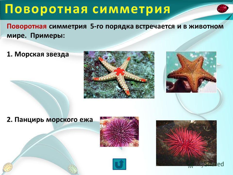 Поворотная симметрия 5-го порядка встречается и в животном мире. Примеры: 1. Морская звезда 2. Панцирь морского ежа
