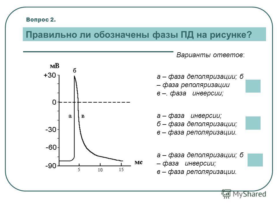 Вопрос 2. Правильно ли обозначены фазы ПД на рисунке? Варианты ответов: а – фаза деполяризации; б – фаза инверсии; в – фаза реполяризации. а – фаза инверсии; б – фаза деполяризации; в – фаза реполяризации. а – фаза деполяризации; б – фаза реполяризац