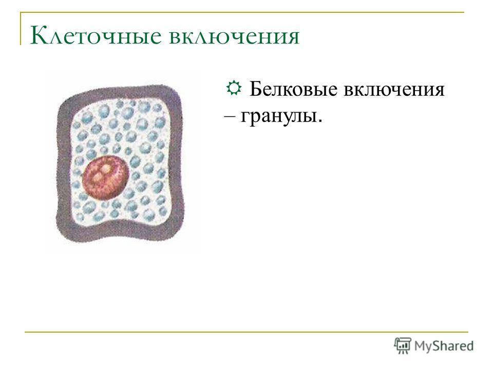 Клеточные включения Б елковые включения – гранулы.