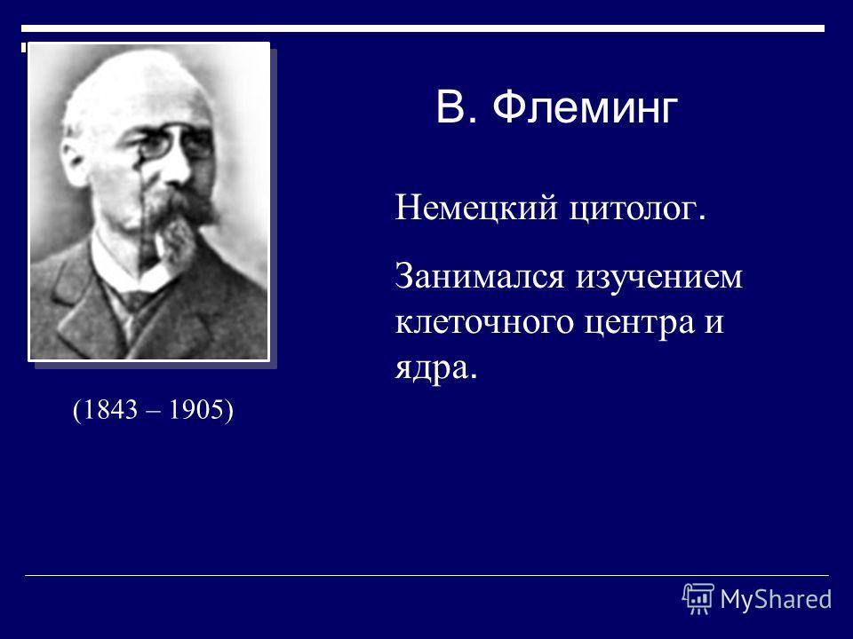 В. Флеминг Немецкий цитолог. Занимался изучением клеточного центра и ядра. (1843 – 1905)