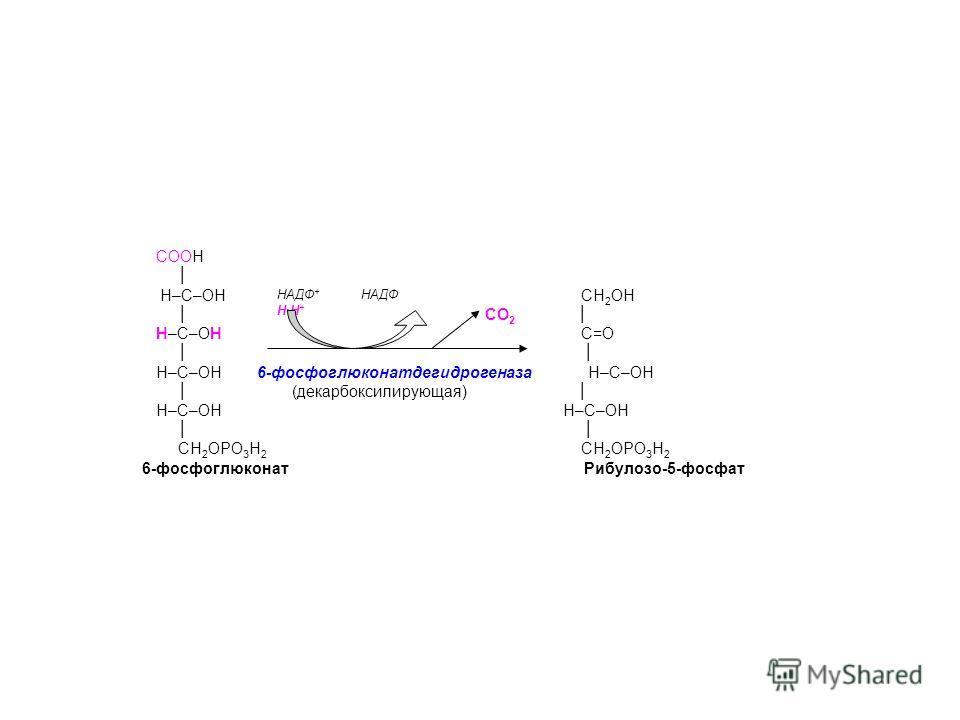 СООН НАДФ + НАДФ НН + Н–С–ОН СН 2 ОН СО 2 Н–С–ОН С=О Н–С–ОН 6-фосфоглюконатдегидрогеназа Н–С–ОН (декарбоксилирующая) Н–С–ОН Н–С–ОН СН 2 ОРО 3 Н 2 СН 2 ОРО 3 Н 2 6-фосфоглюконат Рибулозо-5-фосфат