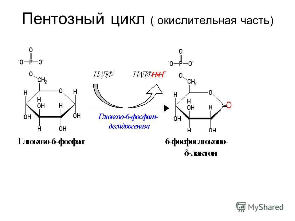 Пентозный цикл ( окислительная часть)
