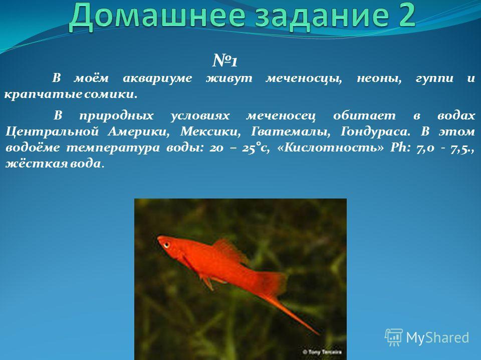 1 В природных условиях меченосец обитает в водах Центральной Америки, Мексики, Гватемалы, Гондураса. В этом водоёме температура воды: 20 – 25°с, «Кислотность» Ph: 7,0 - 7,5., жёсткая вода. В моём аквариуме живут меченосцы, неоны, гуппи и крапчатые со