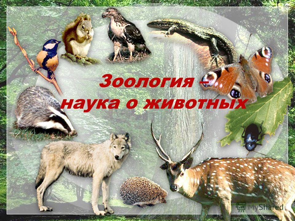 Зоология – наука о животных Зоология – наука о животных