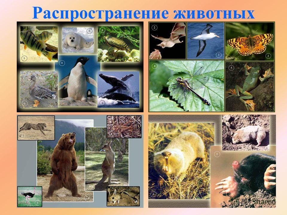 Распространение животных