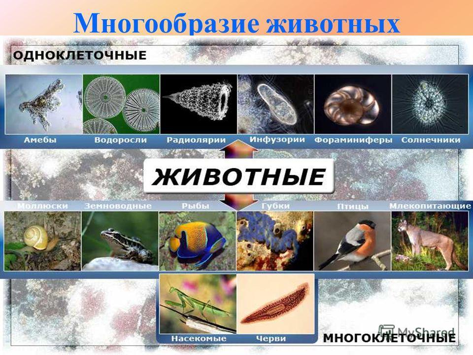 Многообразие животных