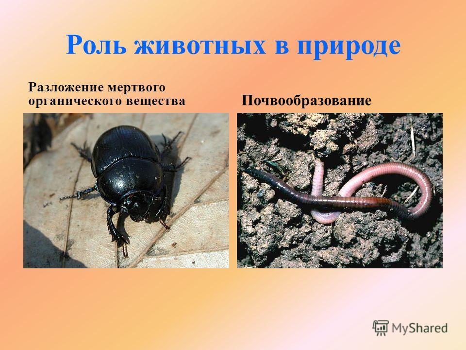 Роль животных в природе Разложение мертвого органического вещества Почвообразование