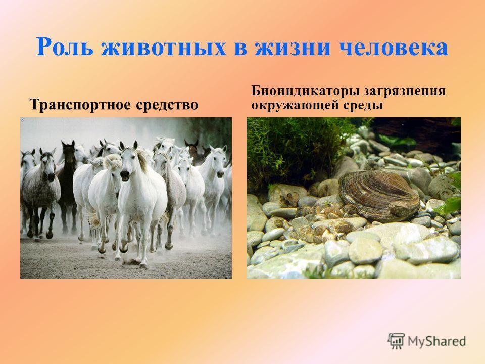 Роль животных в жизни человека Транспортное средство Биоиндикаторы загрязнения окружающей среды