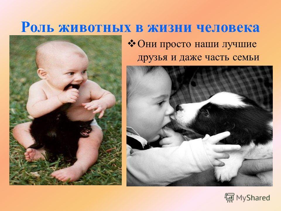 Роль животных в жизни человека Они просто наши лучшие друзья и даже часть семьи