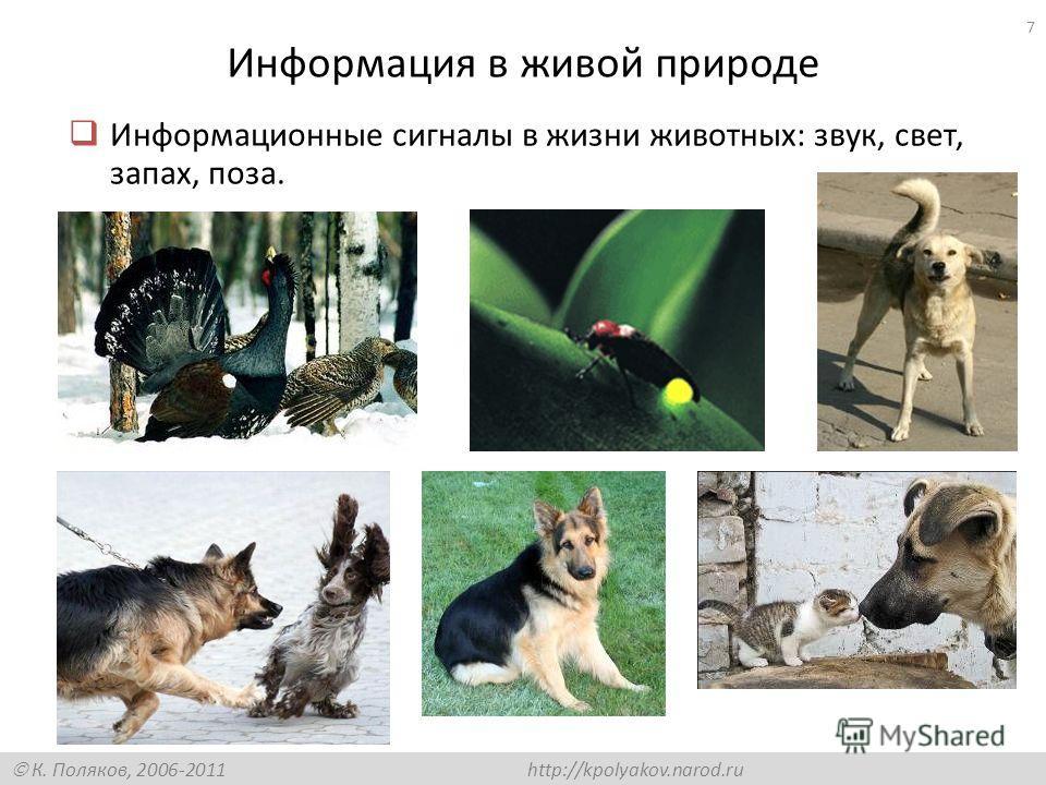 К. Поляков, 2006-2011 http://kpolyakov.narod.ru Информация в живой природе Информационные сигналы в жизни животных: звук, свет, запах, поза. 7