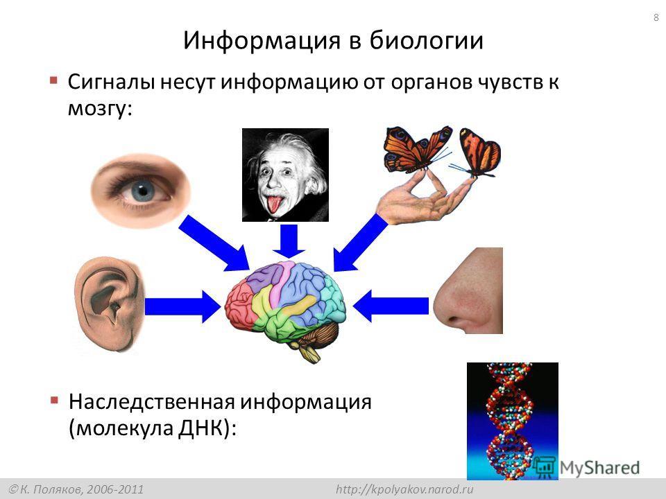 К. Поляков, 2006-2011 http://kpolyakov.narod.ru Информация в биологии Сигналы несут информацию от органов чувств к мозгу: Наследственная информация (молекула ДНК): 8