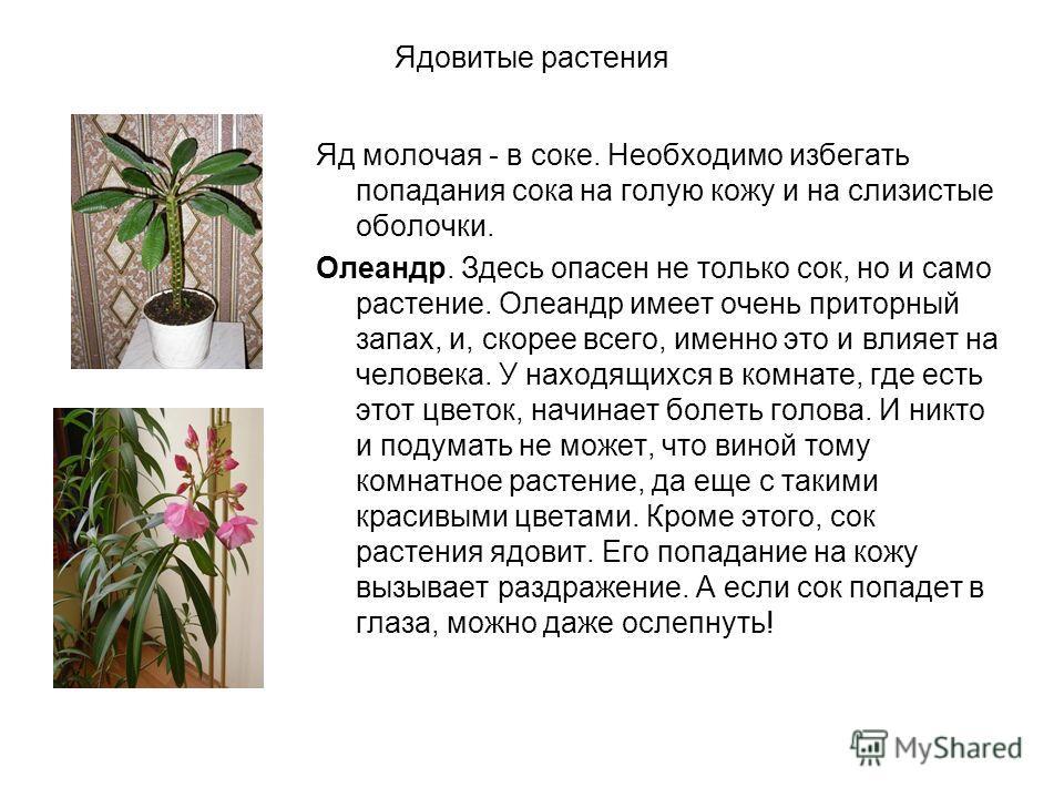 Ядовитые растения Яд молочая - в соке. Необходимо избегать попадания сока на голую кожу и на слизистые оболочки. Олеандр. Здесь опасен не только сок, но и само растение. Олеандр имеет очень приторный запах, и, скорее всего, именно это и влияет на чел