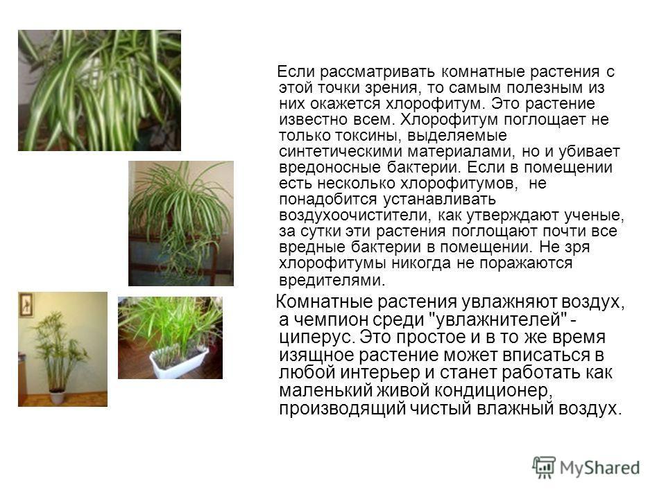 Если рассматривать комнатные растения с этой точки зрения, то самым полезным из них окажется хлорофитум. Это растение известно всем. Хлорофитум поглощает не только токсины, выделяемые синтетическими материалами, но и убивает вредоносные бактерии. Есл
