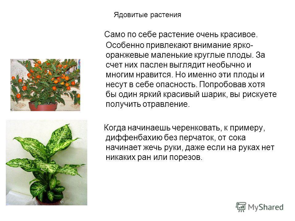 Домашние цветы польза или вред