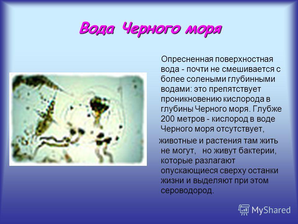 Вода Черного моря Опресненная поверхностная вода - почти не смешивается с более солеными глубинными водами: это препятствует проникновению кислорода в глубины Черного моря. Глубже 200 метров - кислород в воде Черного моря отсутствует, животные и раст