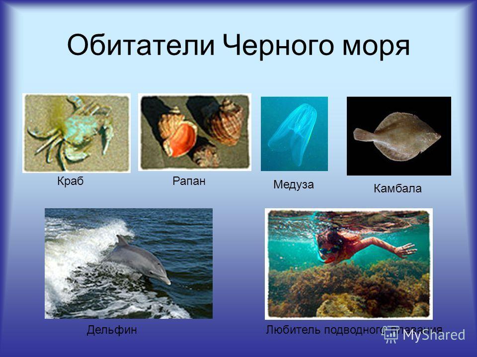 Обитатели Черного моря КрабРапан Медуза Камбала ДельфинЛюбитель подводного плавания