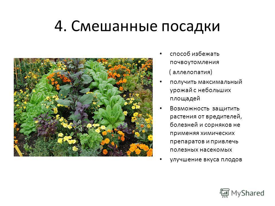 4. Смешанные посадки способ избежать почвоутомления ( аллелопатия) получить максимальный урожай с небольших площадей Возможность защитить растения от вредителей, болезней и сорняков не применяя химических препаратов и привлечь полезных насекомых улуч