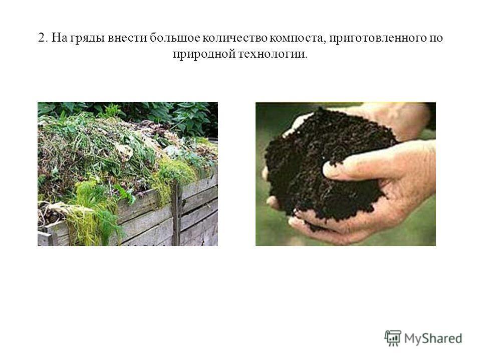 2. На гряды внести большое количество компоста, приготовленного по природной технологии.