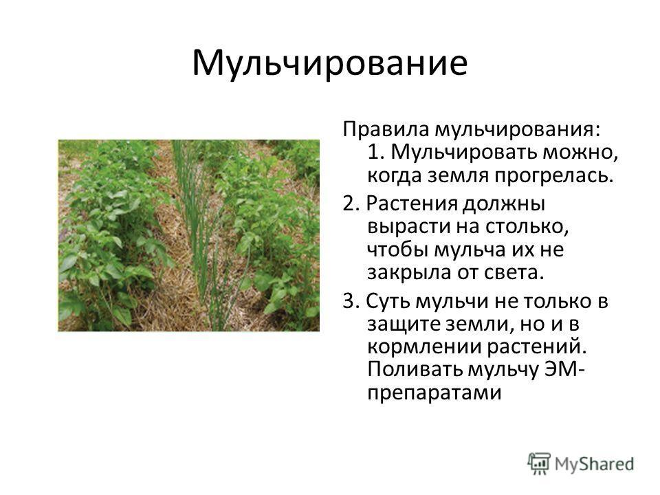 Мульчирование Правила мульчирования: 1. Мульчировать можно, когда земля прогрелась. 2. Растения должны вырасти на столько, чтобы мульча их не закрыла от света. 3. Суть мульчи не только в защите земли, но и в кормлении растений. Поливать мульчу ЭМ- пр