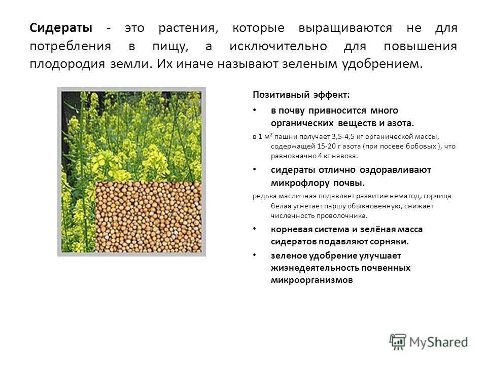 Сидераты - это растения, которые выращиваются не для потребления в пищу, а исключительно для повышения плодородия земли. Их иначе называют зеленым удобрением. Позитивный эффект: в почву привносится много органических веществ и азота. в 1 м² пашни пол