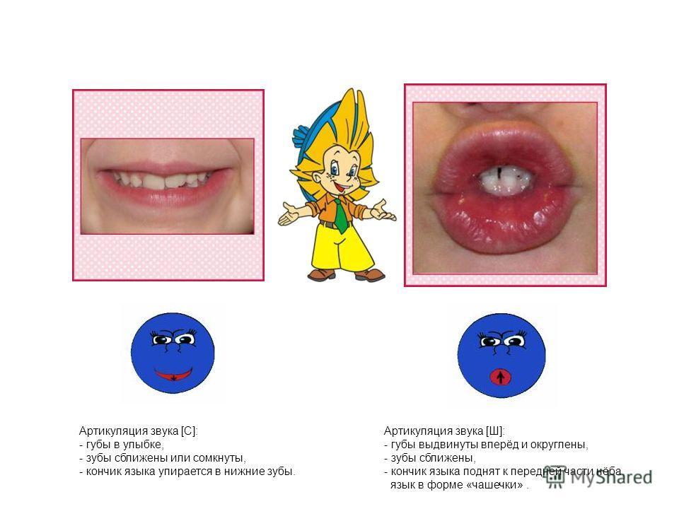 Артикуляция звука [C]: - губы в улыбке, - зубы сближены или сомкнуты, - кончик языка упирается в нижние зубы. Артикуляция звука [Ш]: - губы выдвинуты вперёд и округлены, - зубы сближены, - кончик языка поднят к передней части нёба, язык в форме «чаше