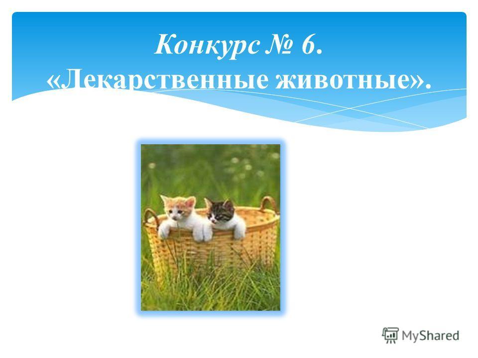 Конкурс 6. «Лекарственные животные».