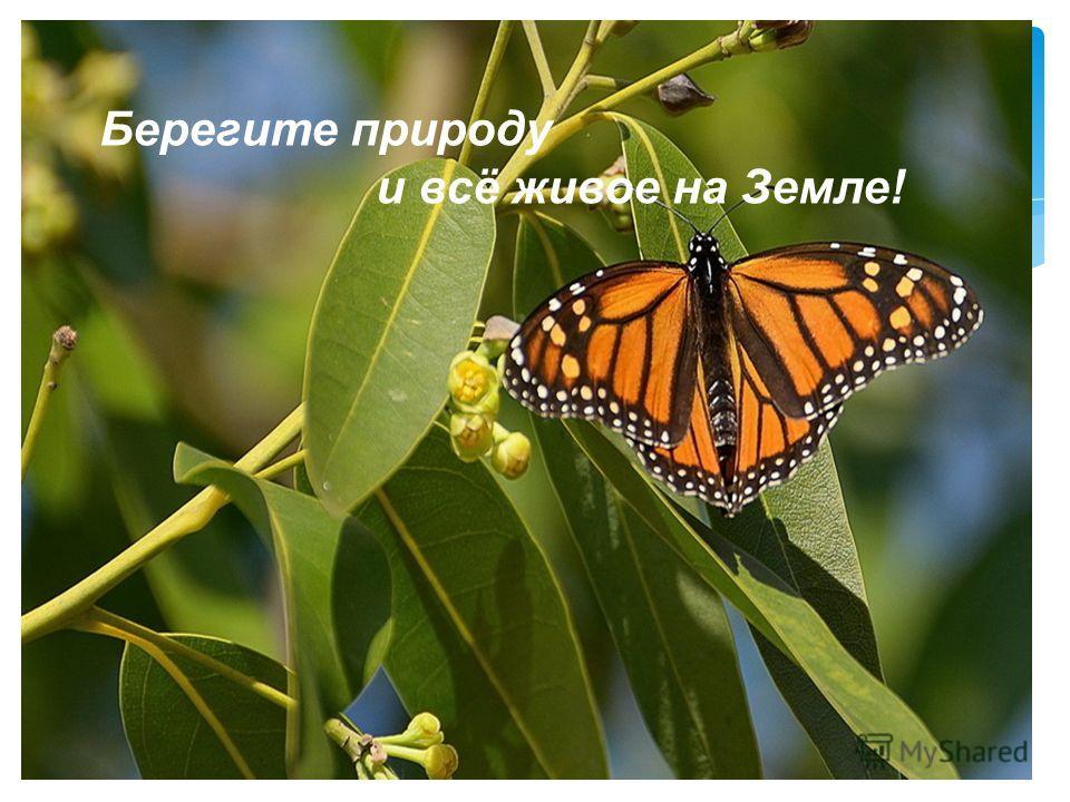 Берегите природу и всё живое на Земле!