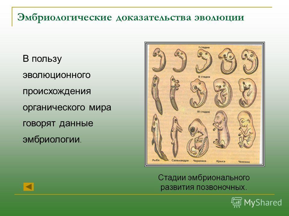 Эмбриологические доказательства эволюции В пользу эволюционного происхождения органического мира говорят данные эмбриологии. Стадии эмбрионального развития позвоночных.