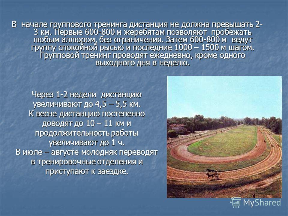 В начале группового тренинга дистанция не должна превышать 2- 3 км. Первые 600-800 м жеребятам позволяют пробежать любым аллюром, без ограничения. Затем 600-800 м ведут группу спокойной рысью и последние 1000 – 1500 м шагом. Групповой тренинг проводя