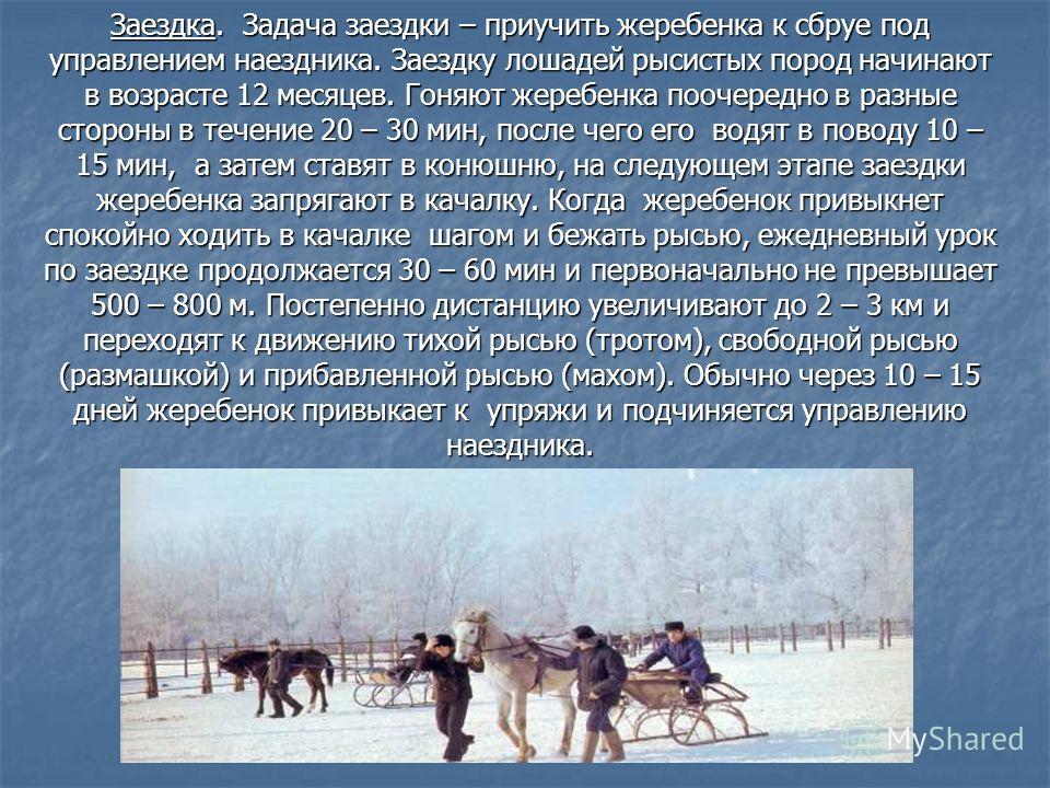 Заездка. Задача заездки – приучить жеребенка к сбруе под управлением наездника. Заездку лошадей рысистых пород начинают в возрасте 12 месяцев. Гоняют жеребенка поочередно в разные стороны в течение 20 – 30 мин, после чего его водят в поводу 10 – 15 м