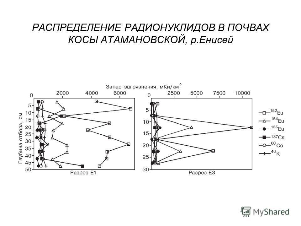 РАСПРЕДЕЛЕНИЕ РАДИОНУКЛИДОВ В ПОЧВАХ КОСЫ АТАМАНОВСКОЙ, р.Енисей