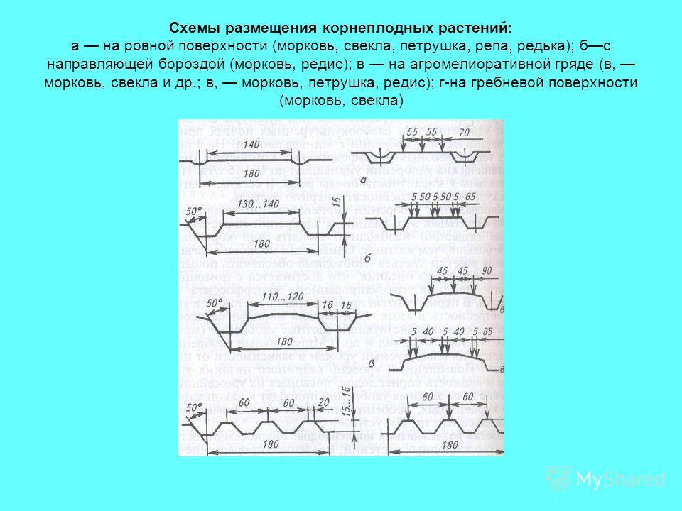 Схемы размещения корнеплодных