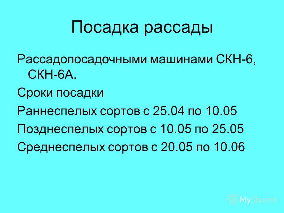 Посадка рассады Рассадопосадочными машинами СКН-6, СКН-6А. Сроки посадки Раннеспелых сортов с 25.04 по 10.05 Позднеспелых сортов с 10.05 по 25.05 Среднеспелых сортов с 20.05 по 10.06