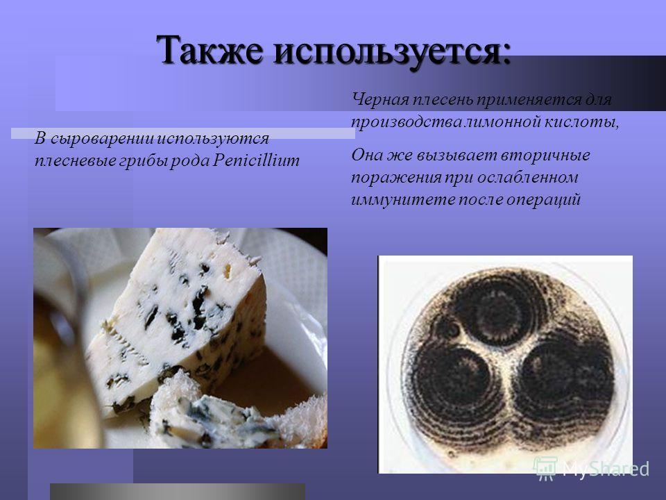 Также используется: В сыроварении используются плесневые грибы рода Penicillium Черная плесень применяется для производства лимонной кислоты, Она же вызывает вторичные поражения при ослабленном иммунитете после операций