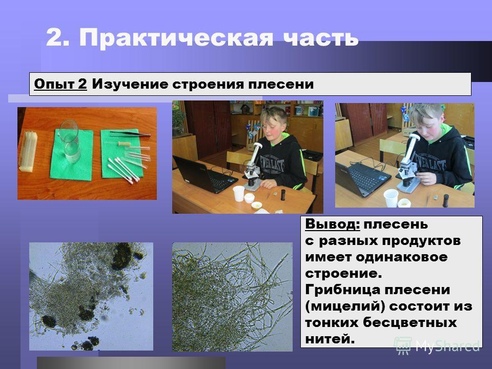 2. Практическая часть Опыт 2 Изучение строения плесени Вывод: плесень с разных продуктов имеет одинаковое строение. Грибница плесени (мицелий) состоит из тонких бесцветных нитей.