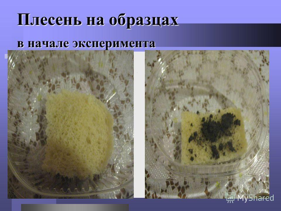Плесень на образцах в начале эксперимента
