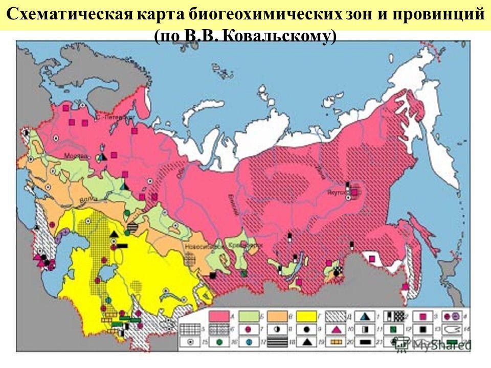Схематическая карта биогеохимических зон и провинций (по В.В. Ковальскому)