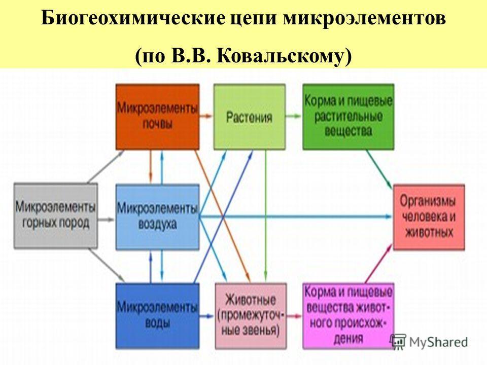 Биогеохимические цепи микроэлементов (по В.В. Ковальскому)