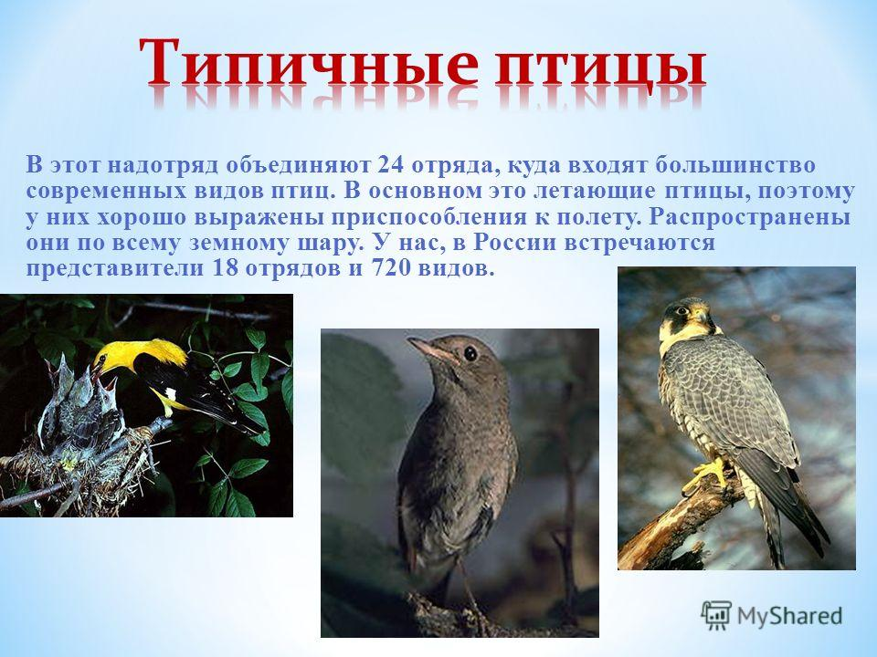 В этот надотряд объединяют 24 отряда, куда входят большинство современных видов птиц. В основном это летающие птицы, поэтому у них хорошо выражены приспособления к полету. Распространены они по всему земному шару. У нас, в России встречаются представ